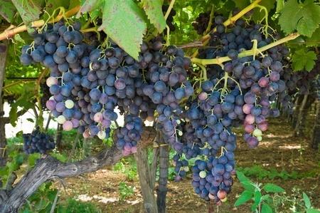 Tid For Anti Passo Vin Godt Drikke