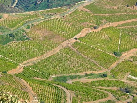 Roussillon.