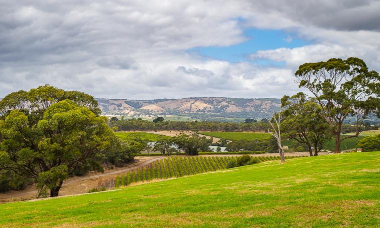 McLaren Vale Distillery, South Australia. Photo: John Krüger