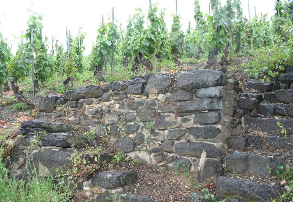 old vineyard2