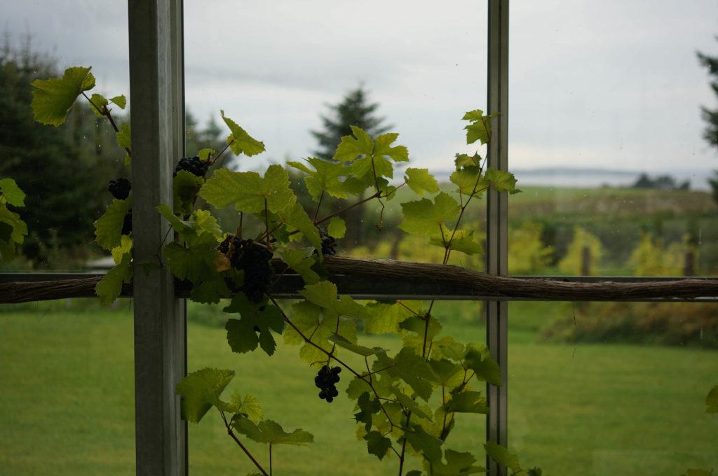 glenholm-vin-jylland-4-2016-oktober-5